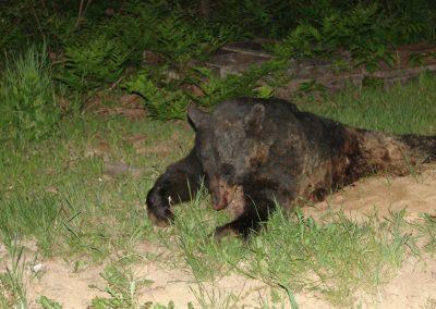 bear hunt 07 (58)