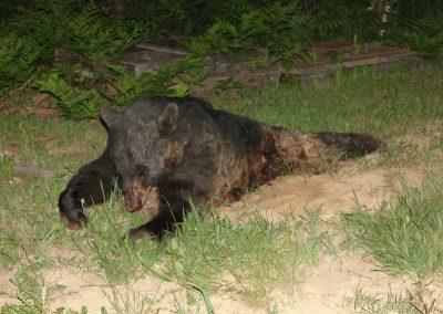 bear hunt 07 (59)