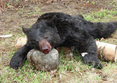bear hunt 08 001