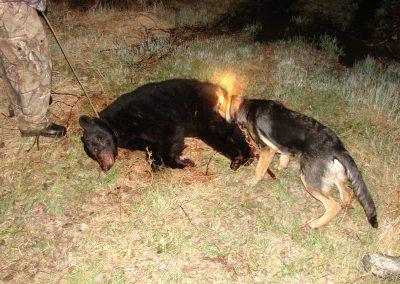 bear hunt 08 012