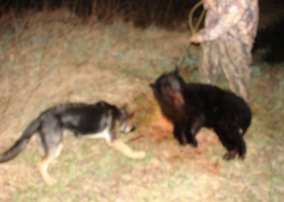 bear hunt 08 016