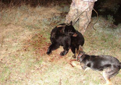 bear hunt 08 017
