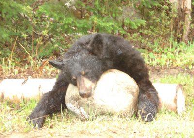 bear hunt 08 038