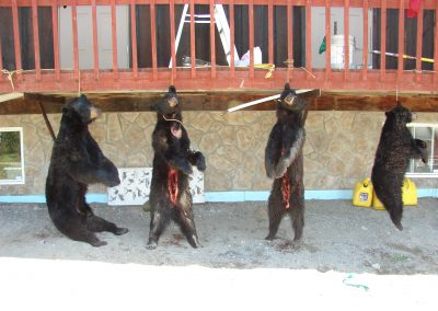 bear hunt 08 092