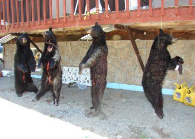 bear hunt 08 093