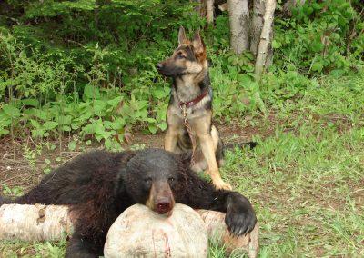 bear hunt 08 113