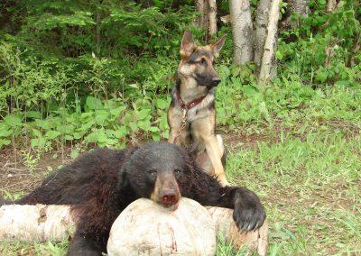 bear hunt 08 114