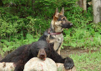 bear hunt 08 117