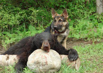 bear hunt 08 118