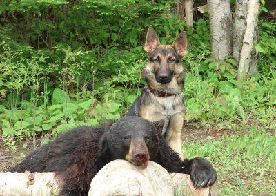 bear hunt 08 121
