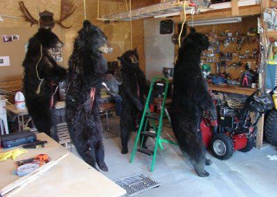 bear hunt 08 182